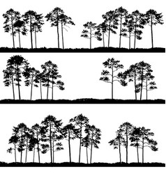 landscapes with pine trees vector image