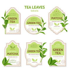 Realistic tea leaves labels vector
