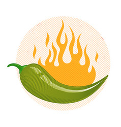 green chili pepper in fire vector image vector image