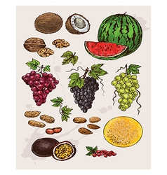 collection of hand drawing fruit vector image