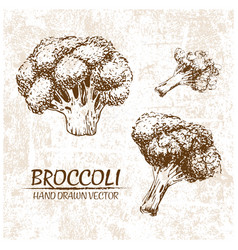 Digital broccoli hand drawn vector