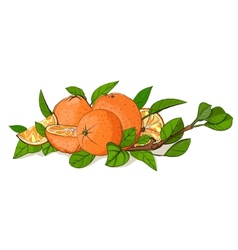 Fresh Oranges and Leaves Composition vector