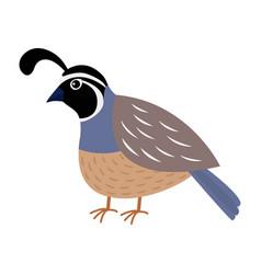 Quail bird cute cartoon character flat design vector