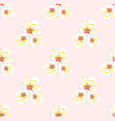 white plum blossom seamless on pink background vector image