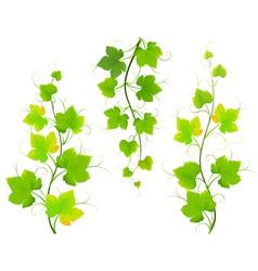 Grape leaves vector image