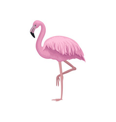 detailed icon of beautiful flamingo with vector image