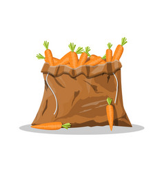 fresh carrot with green leaves in canvas bag vector image