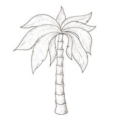 palm tree hand drawn sketch vector image