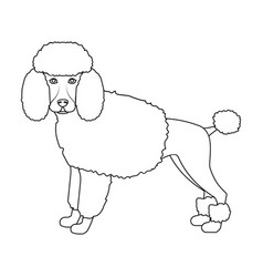 Poodle single icon in outline stylepoodle vector