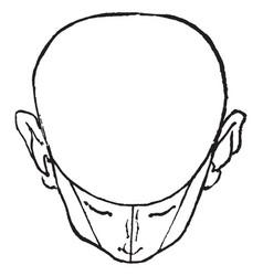 Bald head shown tilted vintage engraving vector