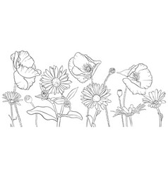 Drawing poppies and daisy flowers vector
