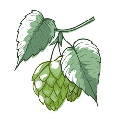 Hops branch with leaves cones green humulus vector