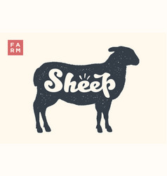 Sheep lettering typography vector