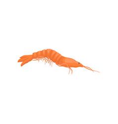 flat icon of red shrimp marine creature vector image