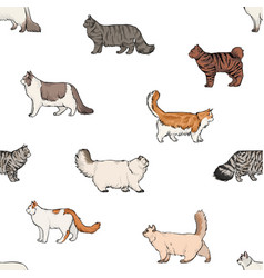 Seamless pattern with domestic cats of various vector