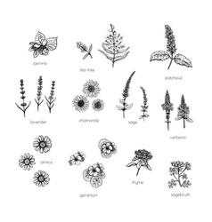 Vintage set with flower aroma sketch vector