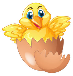little chick comes out of egg vector image