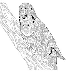 Budgie parrot adult coloring page vector