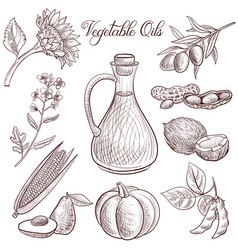 drawing vegetable oil vector image