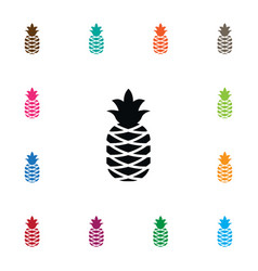 isolated pine icon bromeliads element can vector image