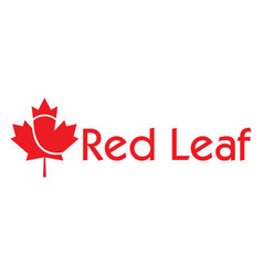 red maple leaf logo design vector image