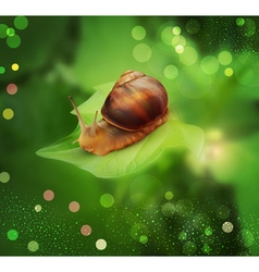snail3 vs vector image