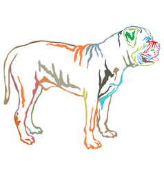colorful decorative standing portrait of boerboel vector image vector image