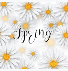 chamomile flower spring background vector image