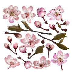 set of blossoming sakura pink flowers vector image vector image