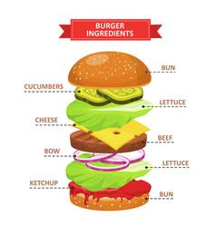 burger ingredients set vector image