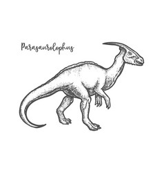 Engraved parasaurolophus dino or sketch dinosaur vector