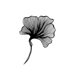 Ginkgo leaf botanical floral plant ink line art vector