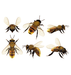 honeybee realistic different wildlife danger vector image