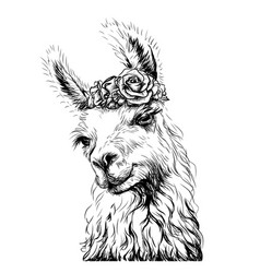 Lama alpaca sticker on wall vector