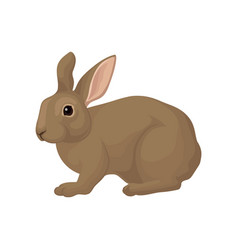 large domestic rabbit with brown fur plant-eating vector image