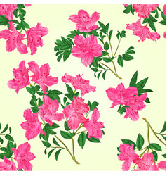 seamless texture pink rhododendron twig vector image