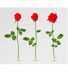 set of red rose flower 3d roses isolated vector image