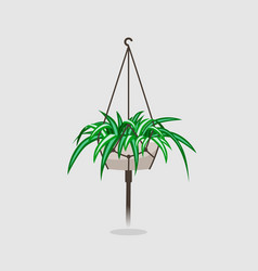 Flat spider house plant vector
