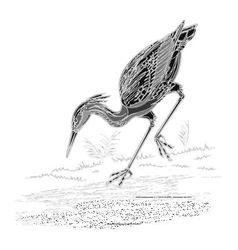 Heron water bird vintage engraving vector image