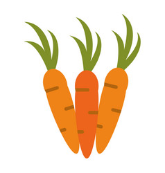 Whole carrots icon image vector