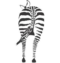 Zebra ass vector