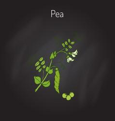 Green peas vector