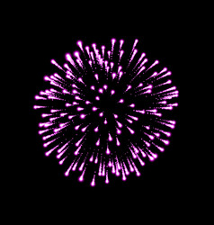 Firework pink bursting isolated background vector