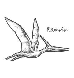 Pteranodon dinosaur sketch vector