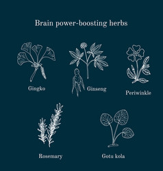 Brain power-boosting herbs set vector