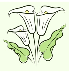 Calla lily color vector