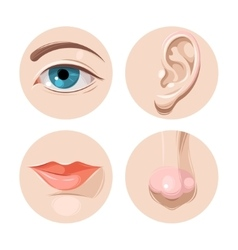 Eye ear mouth and nose vector
