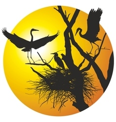 Herons on nest in the ring vector image vector image