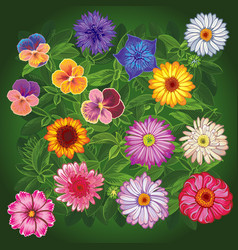 set wildflowers top view vector image