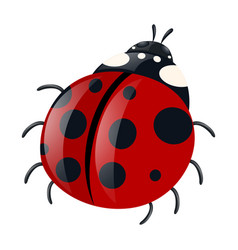 Ladybug with red wings vector